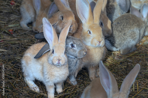Foto Group of small cute rabbits of different colors in a cage on the hay