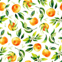 Seamless Watercolour Citrus Fruits And Leaves Pattern. Green Leaves And Orange Fruits On White Background. Seamless Mandarin And Oranges Watercolour Illustration
