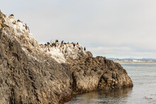 Cliff Full Of Birds, Cliff Covered With Guano