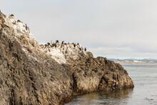 Cliff Full Of Birds, Cliff Cov...