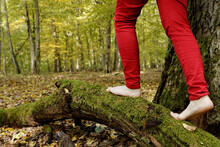 Woman In Red Trousers Is Walking Barefoot On Mossy Tree Trunk In Autumnal Forest Area. Mindful Walk And Nature Connection.