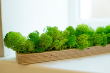 Green Moss In Wooden Box On Th...