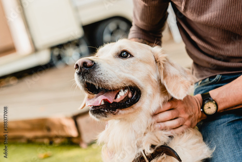 Foto Close up shot of golden retriever with host`s hands with wristwatch