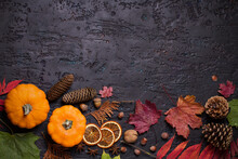 Colorful Autumn Or Thanksgivin...