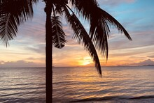 Silhouette Of Tropical Palm Tr...