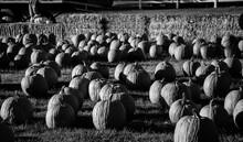 Pumpkins B&W