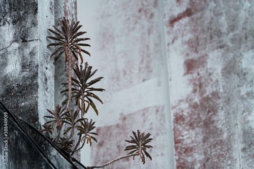 Leinwand Poster small green arid plant on obsolete on white concrete wall background