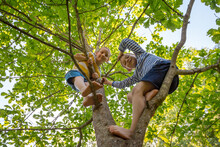 Two Little Boys Friends Climbed Tree And Look Smiling. Happy Children Play In Summer Barefoot Forest. Carefree Childhood