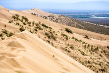Sand Dune With Bushes On A Bac...