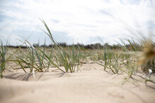 Grass And Dunes