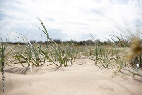 Grass and dunes Billede på lærred