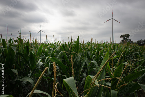 Canvastavla Wind farm with moody sky and clouds in the background and green corn field in th