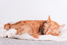 Cute Little Ginger Cat Sleeps On The Sofa With Xmas Santa Hat On, Christmas Or New Year Postcard
