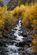 autumn leaves at a mountain creek