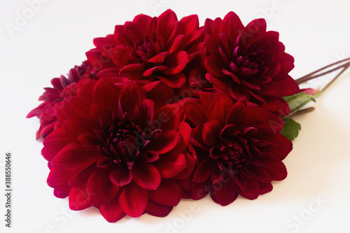 Fotomural Large burgundy dahlias isolated white background