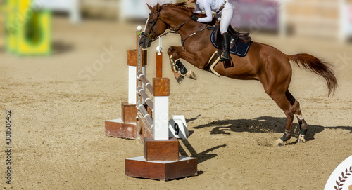 Tela brown horse jumping the obstacle durign a five star competition in Italy