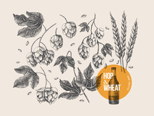 Hand-drawn Set Of Twigs, Cones, Hop Leaves And Spica On A Light Isolated Background. Botanical Vector Illustration. Label Design Element, Packaging For The Production Of Craft Beer In Retro Style.