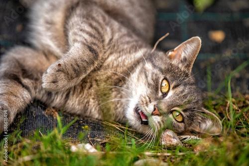 Obraz piękny młody kotek, kocie oczy - fototapety do salonu