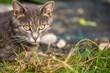 piękny młody kotek, kocie oczy