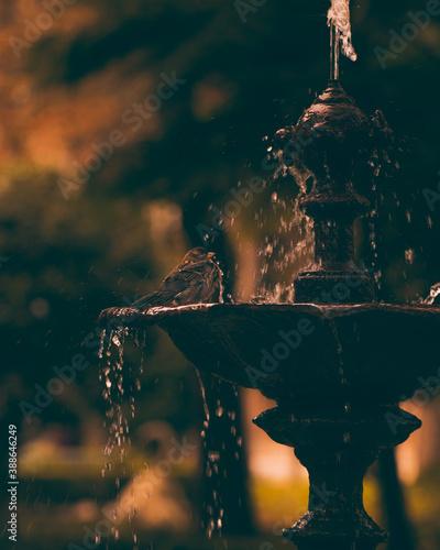 Pequeño pájaro en fuente de agua de piedra