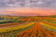 四季彩の丘の展望花畑...