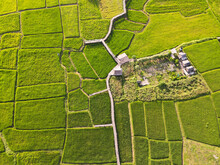 Beautiful Green Rice Fields Fr...