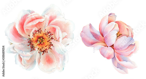 Flowers watercolor illustration Fototapet