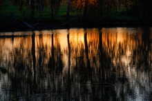 Reflection Of Trees In The Water In The Sunbeams In The Evening