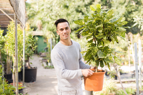 Fotografiet Smiling young male florist carrying potted Aucuba japonica with colorful spotted
