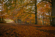Panoramic view of autumn beech forest in the italian park, Europe