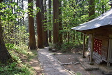羽黒山の杉並木 / 山形県鶴岡市の羽黒山参道の杉並木は県指定史跡で、全国かおり風景百選、森林浴の森百選に選定されています。随神門から始まる表参道は、全長約1.7km、2446段の長い石段で、頂上に至るまで杉並木が続きます。杉並木の数は500本以上で、樹齢350~500年の杉並木です。この杉並木は、国の特別天然記念物に指定され「ミシュラン・グリーンガイド・ジャポン」にて、三ツ星を獲得しました。