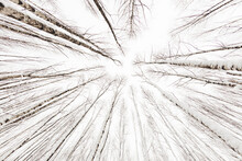 Winter Forest. Snowy Wood Capt...