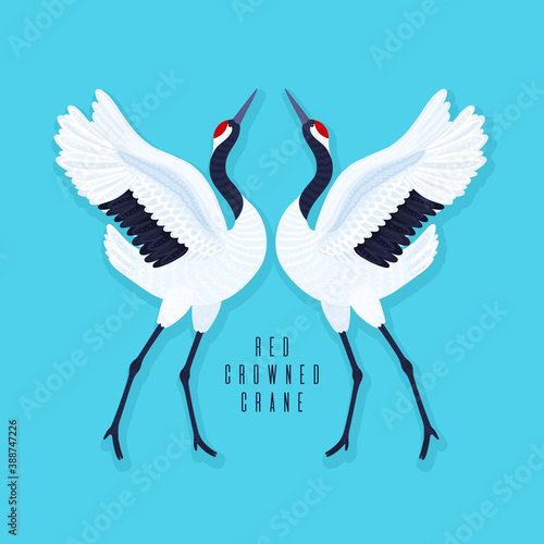 Naklejka premium Pair of red crowned cranes and heart. Blue background with dancing East Asian birds. Endangered species. Card, print on t-shirt and other apparel, cover, banner, poster, label. Vector illustration