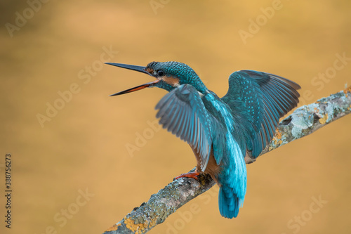 Photo Kingfisher perched on a gray foggy branch background
