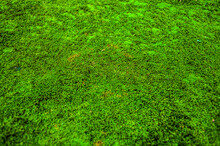 Background Of Green Moss With ...