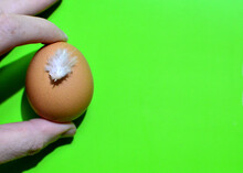 Chicken Egg With A Feather In ...
