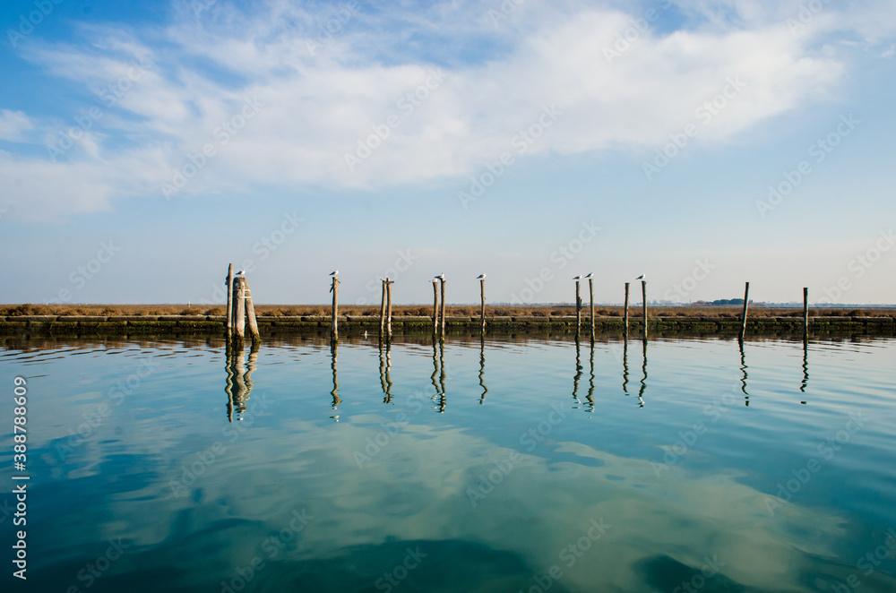 Fototapeta Gabbiani riposano nella laguna di Venezia