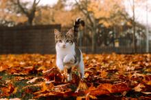 Kitten Running On Leaves.