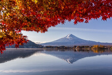 Fuji Mountain And The Red Mapl...