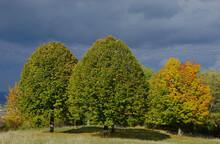 Herbstlandschaft Mit Linden Und Ahorn Vor Dunklem Himmel