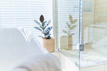 Potted Plant In Sunny White Home Showcase Interior Bathroom