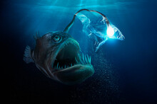 Large Deep Sea Fish With Light Bulb Trapped In Plastic Bag