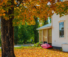 Changing Seasons: Front Yard Covered With Golden Maple Leaves With A Red Kayak