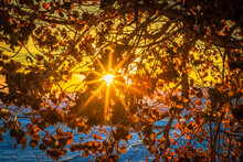Beautiful And Colorful Sunburst Sun Seen Through The Golden Fall Leaves Of A Tree In Badlands National Park.