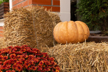 Halloween Decorations, Big Pumpkin Sheaves Of Hay And Flowers