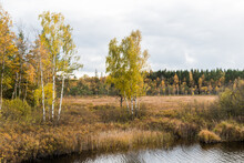 Fall Season In A Marshland