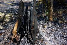 燃えた木の幹