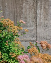 Pink And Orange Flowers Against Stone