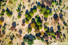 Aerial View Of Beautiful Autumn Forest
