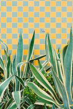 Checker Wall Plant